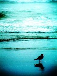 seagull-480x640-480x640
