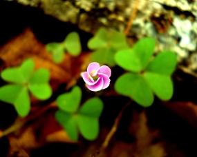 spiral-flower